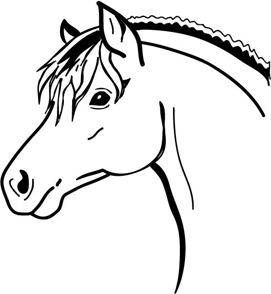 Paarden Afbeeldingen Tekeningen Ly56 Belbin Info